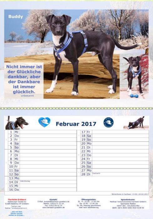 Tierheim-Kalender 2017